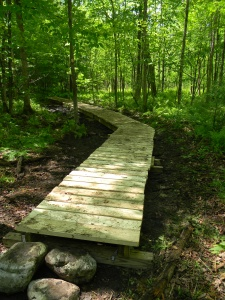 Boardwalk on trail