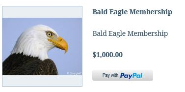 Member Bald Eagle