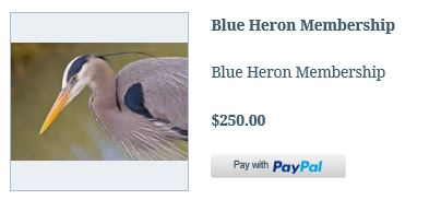 Member Blue Heron