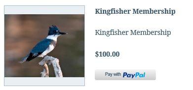 Member Kingfisher