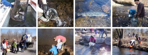 Trout stocking pics